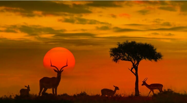 South Africa prairie at sunset