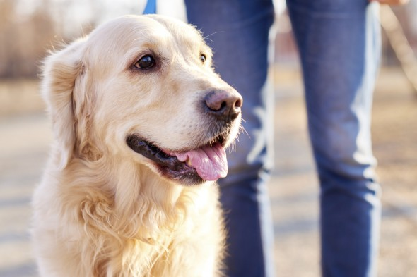 The Most Dog-Friendly Cities in America