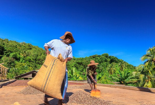 Top 3 Ways the Chocolate Industry is Changing