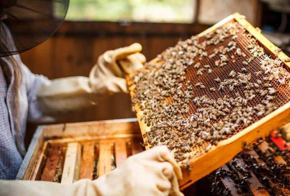 How to Start Beekeeping