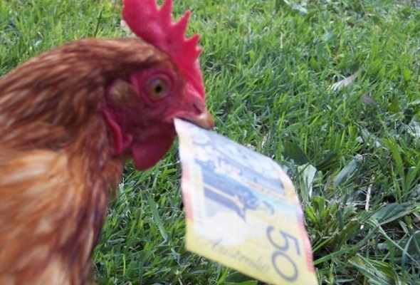 A Guide to Choosing a Checking Account for Chickens