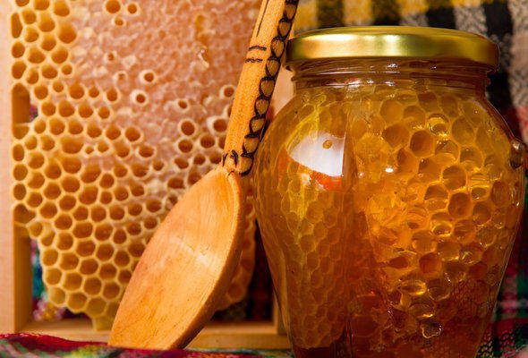 How to Start Beekeeping