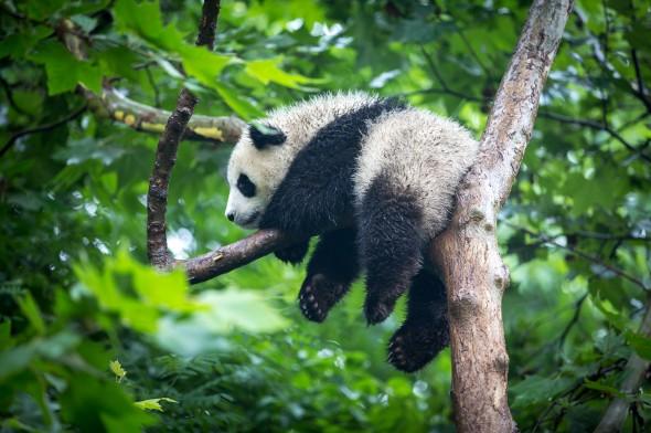 The Economics of Zoos