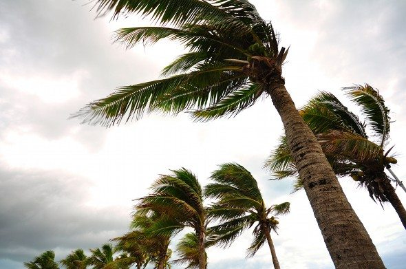 How Businesses Can Prepare for Hurricane Season