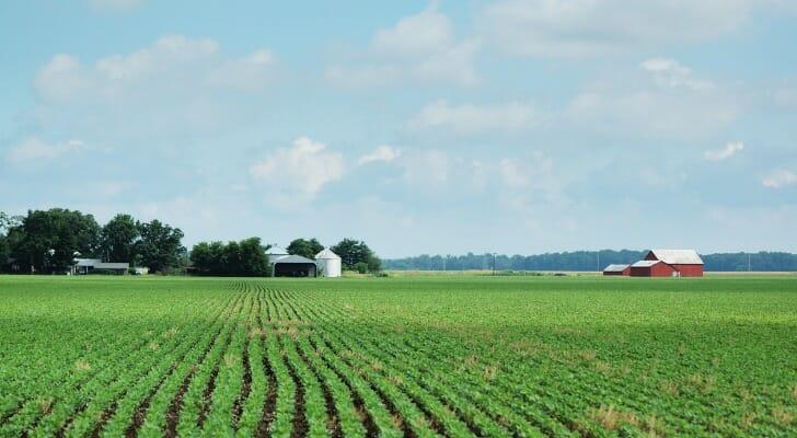 Soybean field in Indiana
