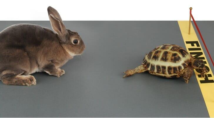Tortoise beats hare in a race