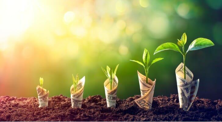 Dollar bill seedling growth