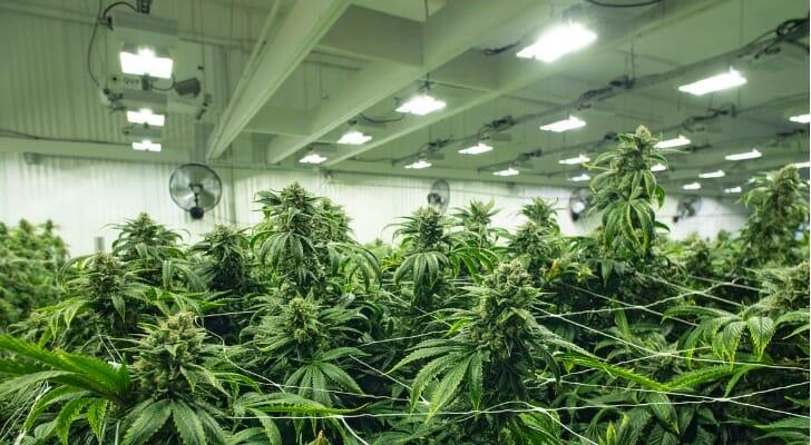 Here's how to buy marijuana stocks.