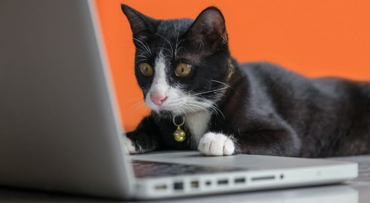 """This day-trading cat just learned the term """"dead cat bounce"""""""