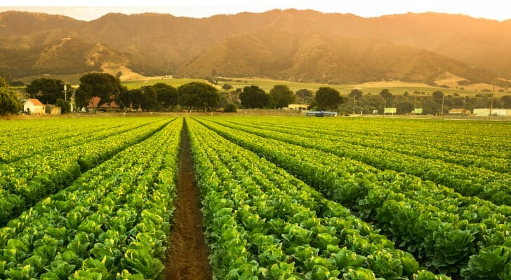 Field of crops in Salinas Valley, California