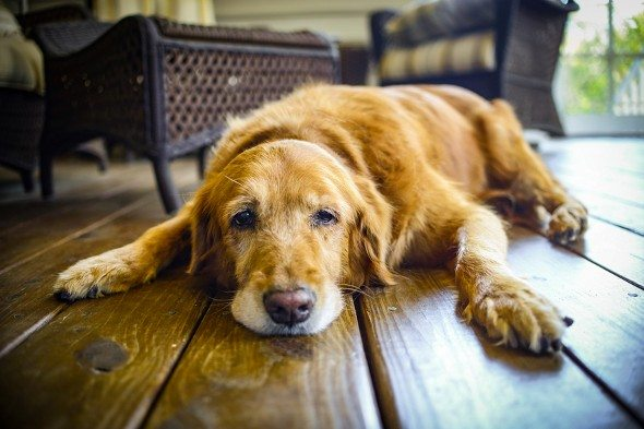 4 Tips for Selling a Home When You Have Pets