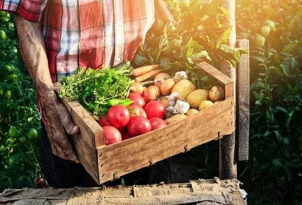 Understanding Agricultural Tax Exemptions