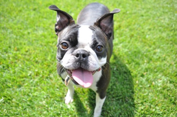 Do You Really Need Pet Insurance?