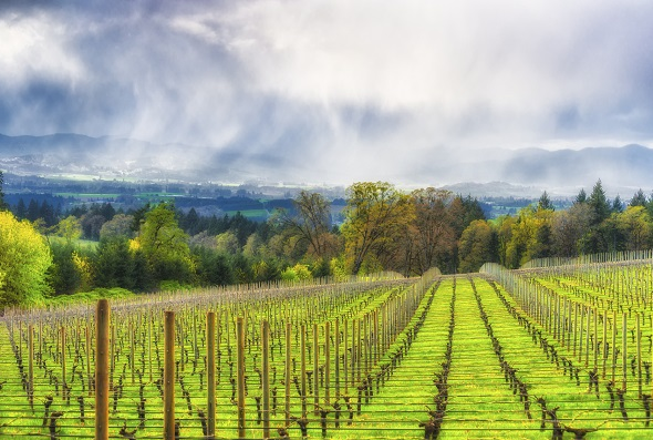 America's Best Wine Destinations of 2016