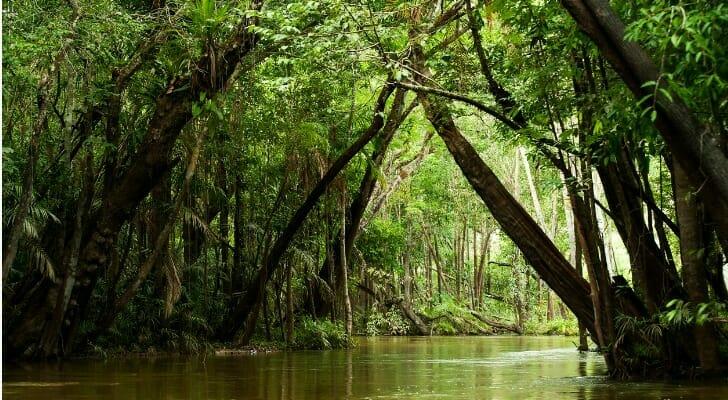 Amazon River tributary