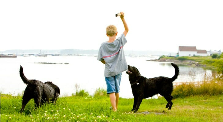 Boy in Maine playing fetch with two dogs